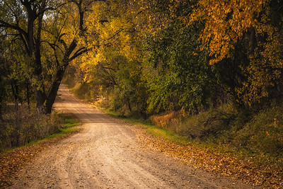 Golden Road In Loess Hills