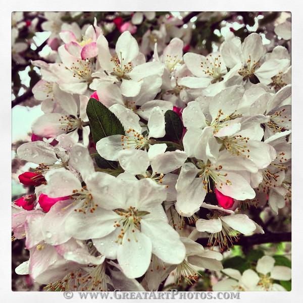 Spring 4.jpg