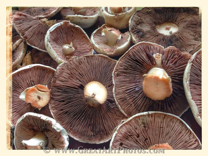 Field Mushrooms.jpg