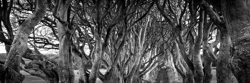 Dark Hedges (3:1)
