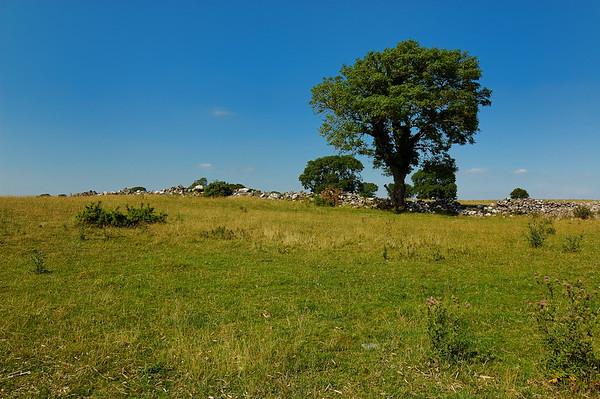 Rindoon Fields