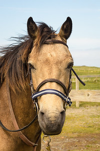 The Brown Horse of Inishbofin