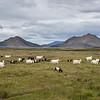 Région de Myvatn, nord de l'Islande.