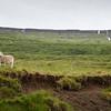 Les moutons ne sont jamais très loin dans les fjords de l'Ouest.