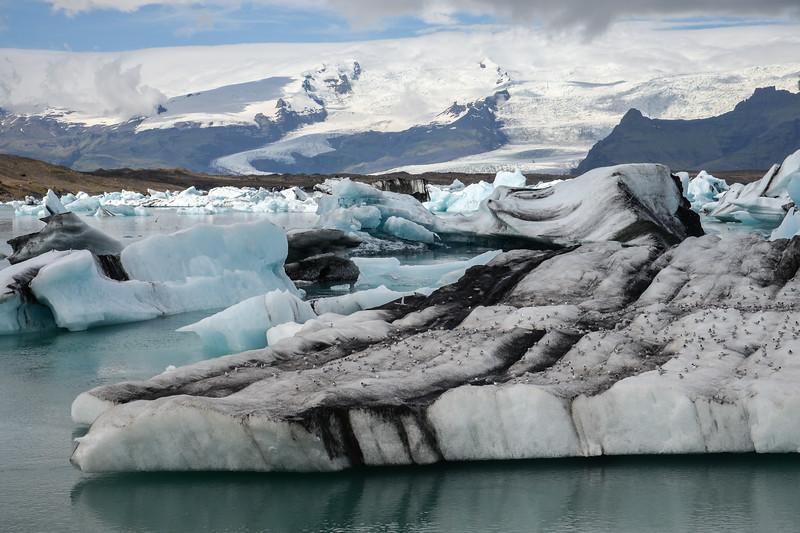 Jökulsárlón. Notez les nombreux sternes arctiques et la cendre volcanique sur l'Iceberg.
