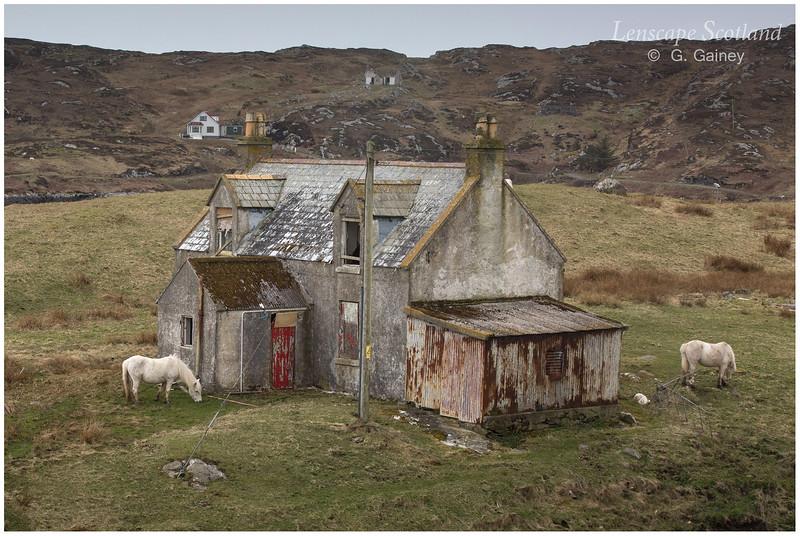 Eriskay ponies, Acairseid Mhor, Isle of Eriskay 2