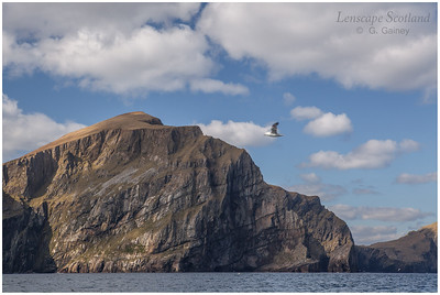Conachair cliffs (1)