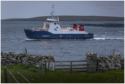 Evening ferry arriving at Belmont, Unst