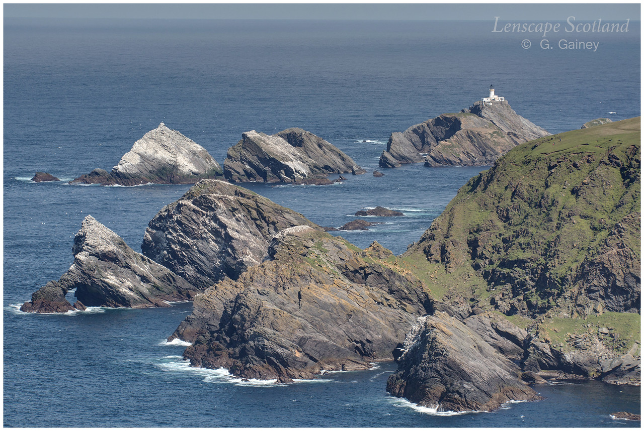 Herma Ness sea stacks and gannetry (1) (Unst)