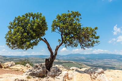 Tree Doublet