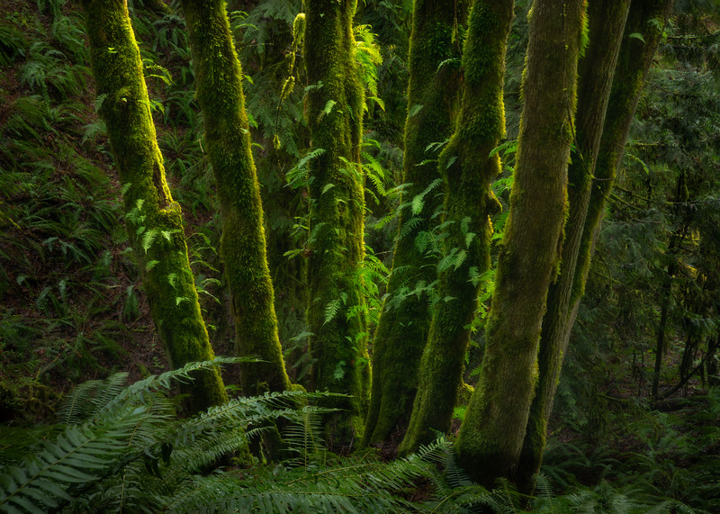 Fern Hill Forest