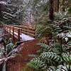 Tiger Mountain Trail (TMT) Bridge