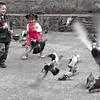 Ahhhh courir après les pigeons, qui ne l'a pas fait ?