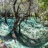 Récolte des olives, Cinquetere