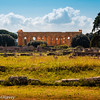Temple of Hera Glows at Paestum, Italy