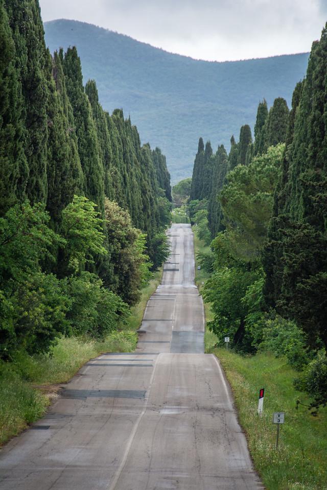 Bolgherri Lane