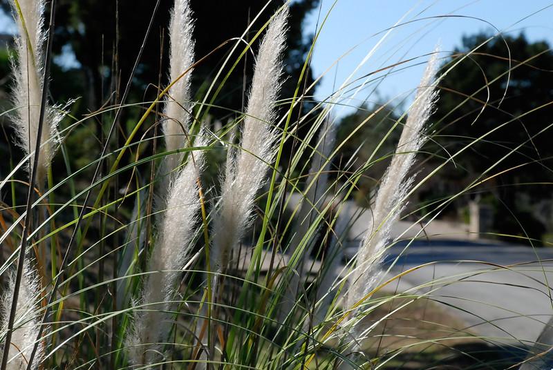 sunlight in tall grass