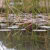 Marsh Reflections ~ Huron River Watershed