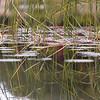 Marsh Reflections ~ Huron River Watershed