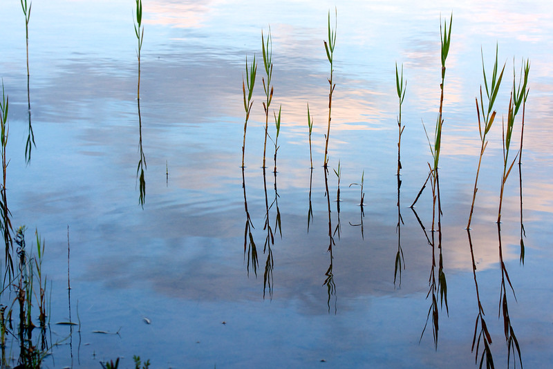 wetland reflections ~ Lake Huron