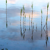 reeds, with reed and cloud reflections ~ Lake Huron