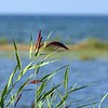 summer shores ~ Lake Huron