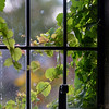 The Window ~ Cotswold Cottage, The Henry Ford