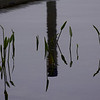 water fronds and reflections ~ Hancock Pond, Maine
