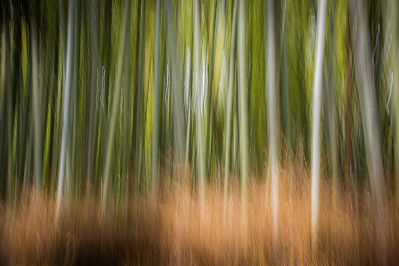 Arashiyama Bamboo Forest, Kyoto, Japan. Abstract