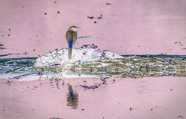 Bird, Juniko Lakes, Aomori, Japan. Abstract