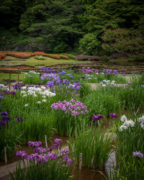 Grounds of The Imperial Palace, Tokyo, Japan