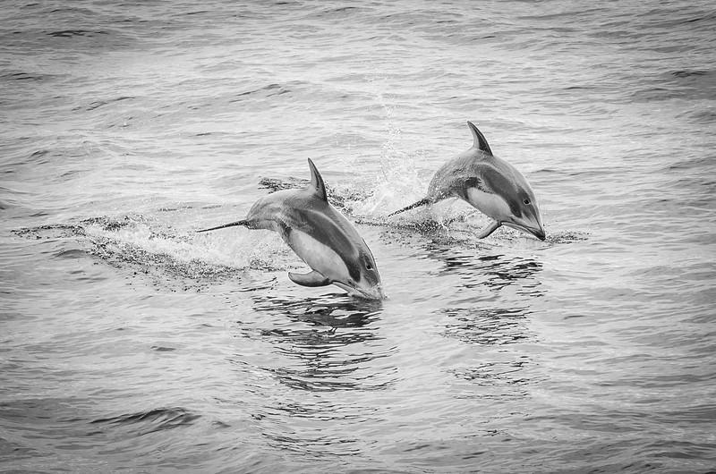 Dolphin, by Otaru, Japan