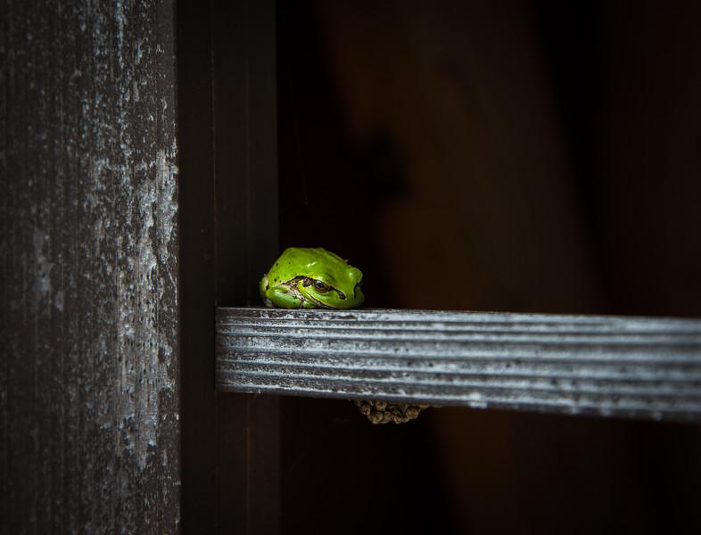 Frog, Sado Island, Japan