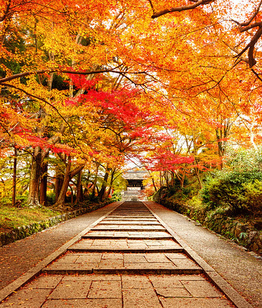 Red Path to Bishamon - 毘沙門