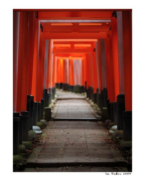 "Perfect light on the amazing Torii trails of the Fushimi Inari Shrine.  This is my favorite place in Kyoto Japan.  My other images of Fushimi Inari:  <a href=""http://www.ianz28.smugmug.com/gallery/668493_aU6zX#61903245_PEPWb-A-LB"">http://www.ianz28.smugmug.com/gallery/668493_aU6zX#61903245_PEPWb-A-LB</a><br />  <a href=""http://ianz28.smugmug.com/gallery/363615_ng25V#53968667_KXKPQ-A-LB"">http://ianz28.smugmug.com/gallery/363615_ng25V#53968667_KXKPQ-A-LB</a>"