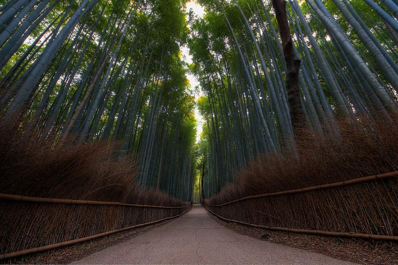 Chikurinnomichi Bamboo Forest