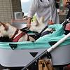 Les japonais soignent leurs animaux de compagnie
