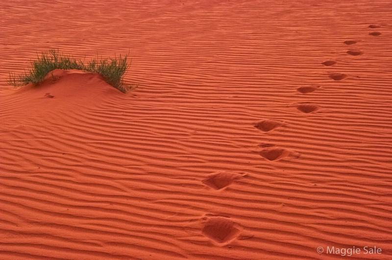 Wadi Rum - my footsteps