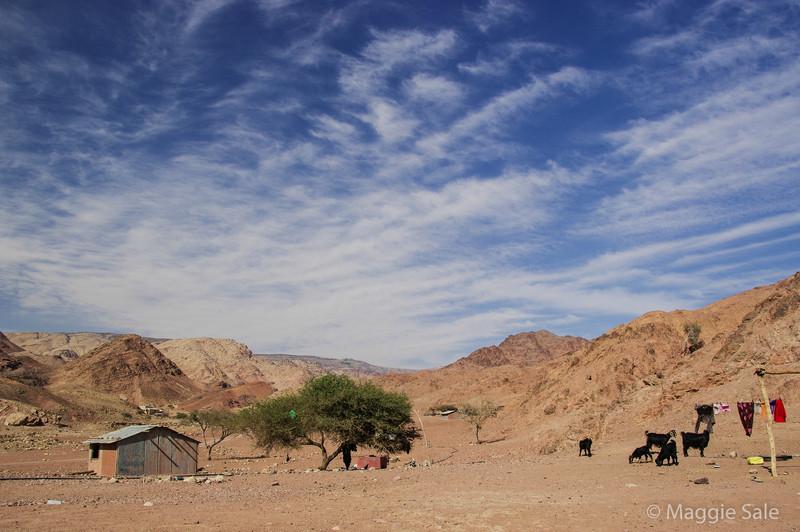 Dana Nature Reserve - bedouin camp