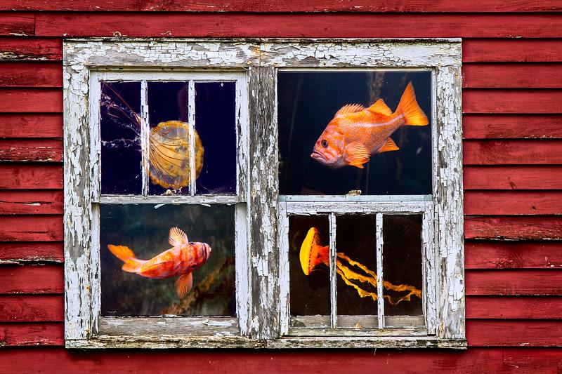 Old Home Aquarium