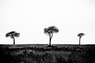 Silhouette | Maasai Mara, Kenya
