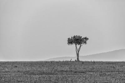 Lone Tree | Maasai Mara, Kenya