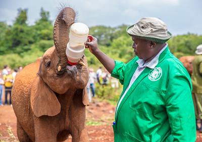 Elephant Orphanage | Nairobi, Kenya