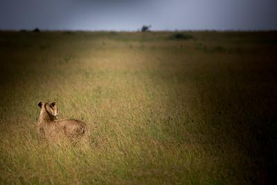 Watching and Waiting | Maasai Mara, Kenya