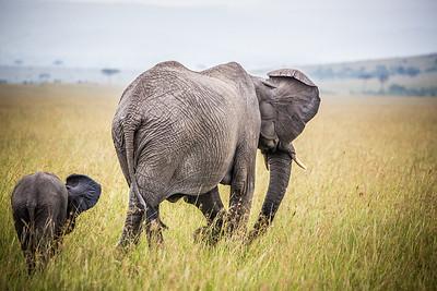 Chasing the Butterfly | Maasai Mara, Kenya