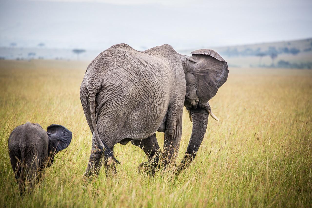 Chasing the Butterfly   Maasai Mara, Kenya