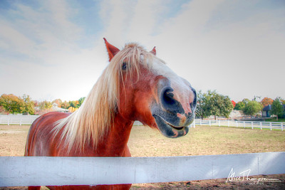 Horse with Blonde Mane - Keeneland (HDR)