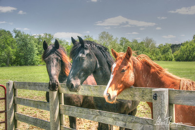 Three Horses (HDR)