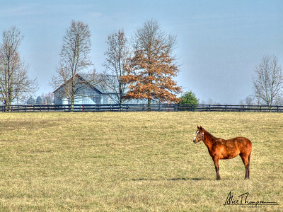 Horse and Barn - Lexington