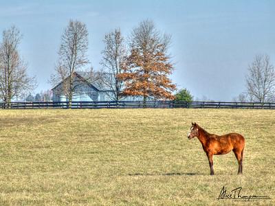 Horse and Barn - Lexington